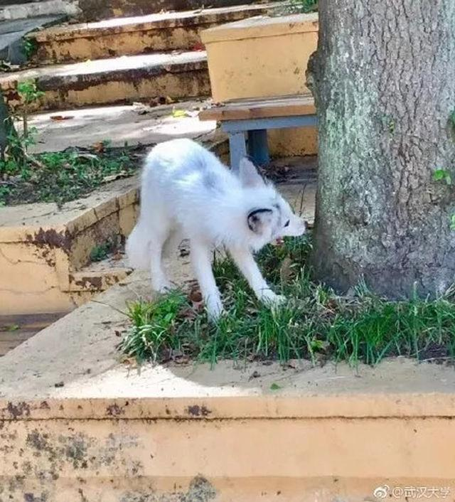武汉动物园兽医院院长,动物专家汪明权先生在研究这段视频后说,视频