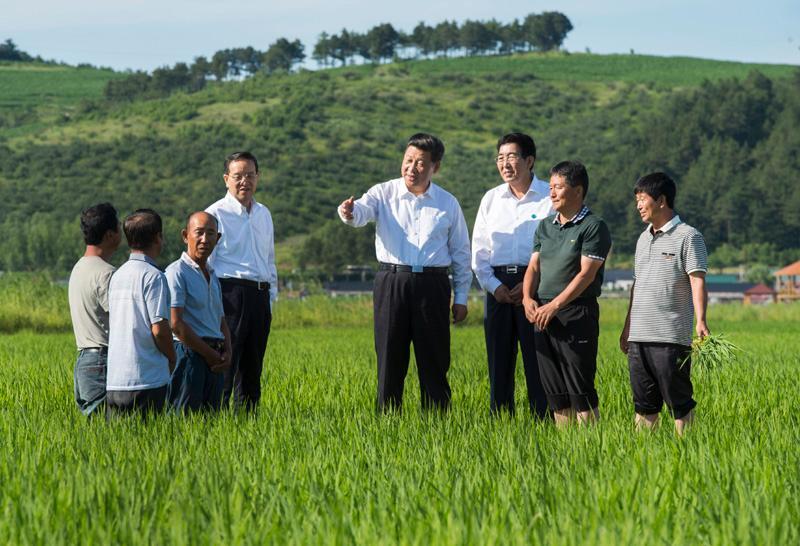 """习近平""""三农""""金句:""""说一千、道一万,增加农民收入是关键"""""""