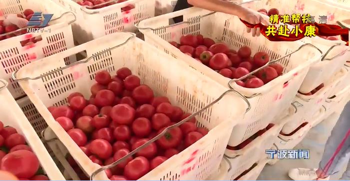 精准帮扶 共赴小康丨普安试种水果番茄成功 消费扶贫助销售