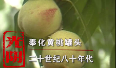 光阴——奉化黄桃