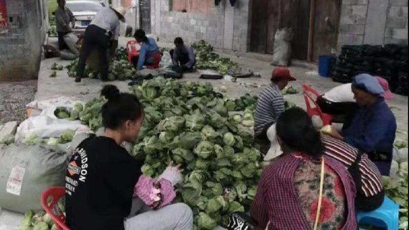 精准帮扶 共赴小康 丨 亩产收益增长5倍!首批册亨产蔬菜运抵宁波