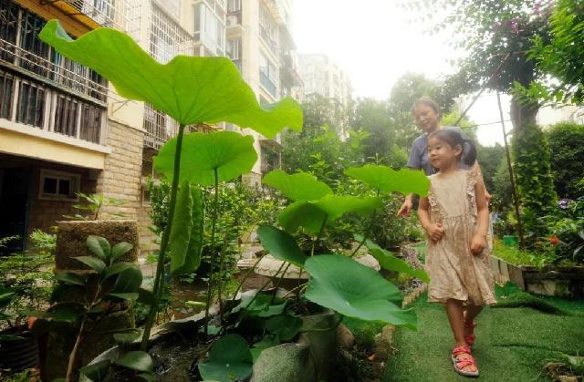 小区居民抢着认领当花匠 曾脏乱差的绿地成了共享花园