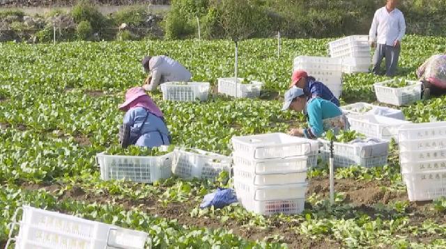 脱贫攻坚看变化丨政企协作帮扶 农户小田埂变身蔬菜大基地