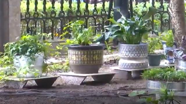 与文明同行丨新马社区:绿化微改造 卫生死角变身花园小景