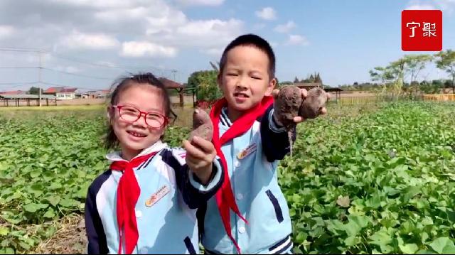 光盘校园行·江北丨从农田到餐桌,番薯下肚需要几个步骤?