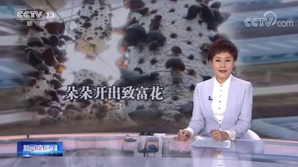 """央视聚焦!宁波帮扶延边汪清 """"小""""木耳变成""""大""""产业"""