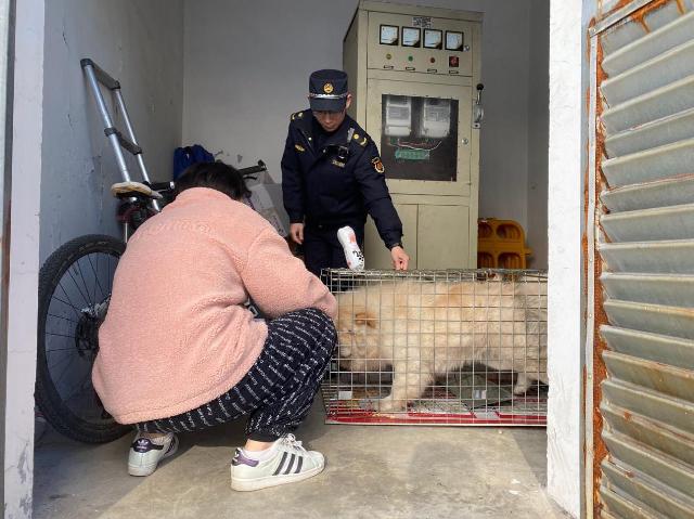 """遛狗牵绳率超8成 刚刚发布的这份宁波文明养犬""""成绩单""""很亮眼"""