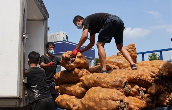 """""""来了!来了!""""19吨帮扶销售的凉山土豆首次运到宁波"""