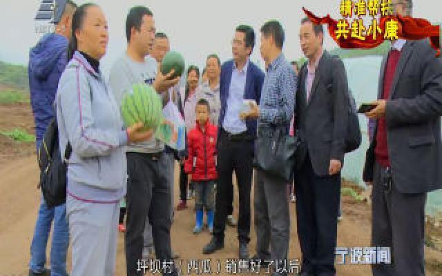 """精准帮扶 共赴小康丨海曙西瓜远""""嫁""""黔西南结硕果"""